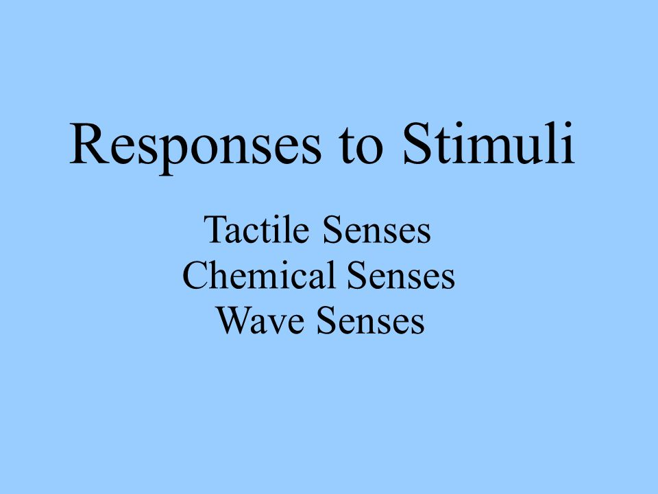 Responses to Stimuli Tactile Senses Chemical Senses Wave Senses