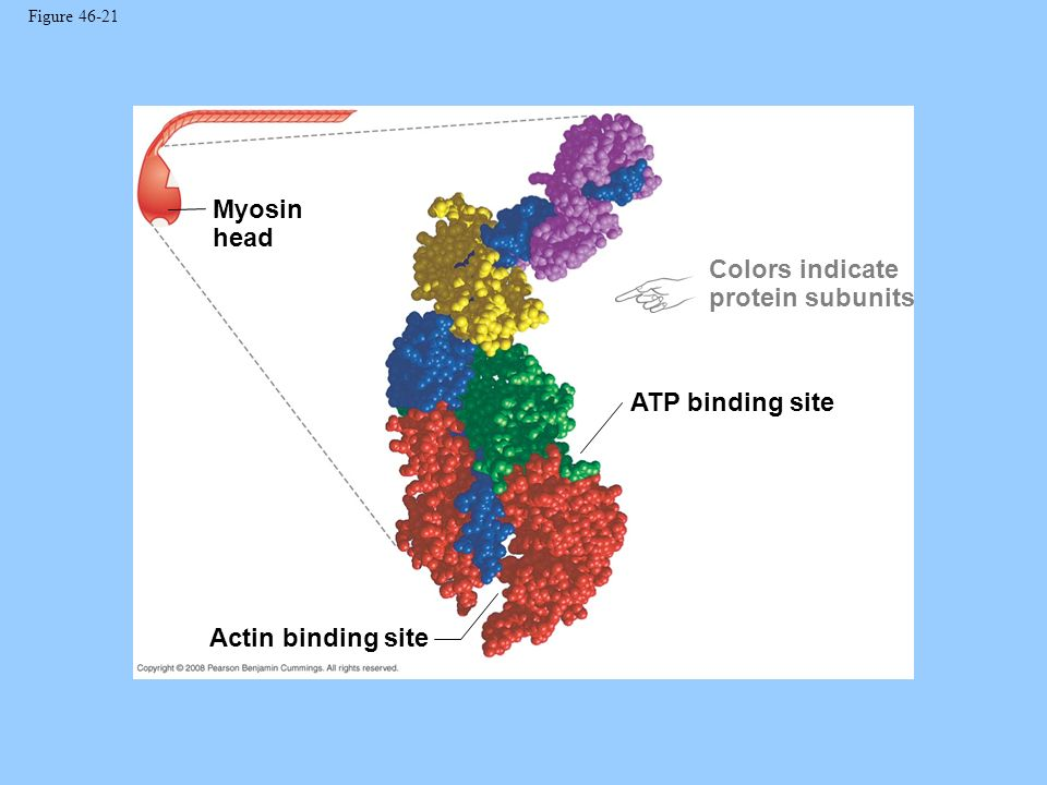 Colors indicate protein subunits