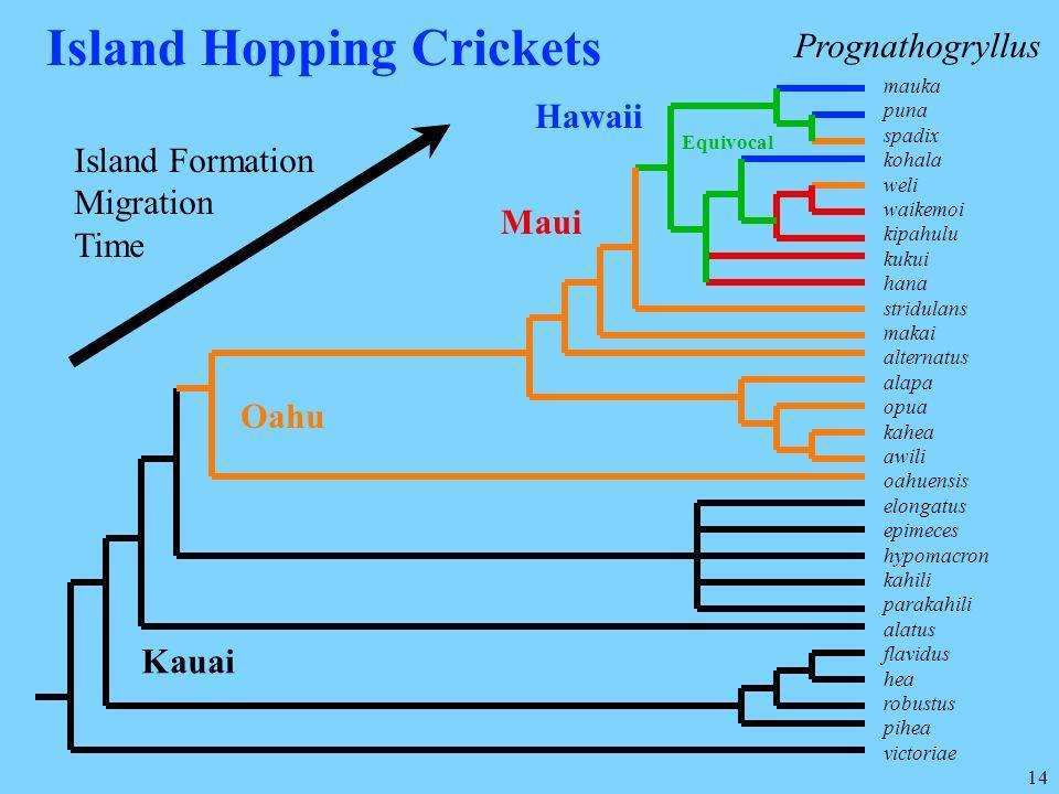 Island Hopping Crickets