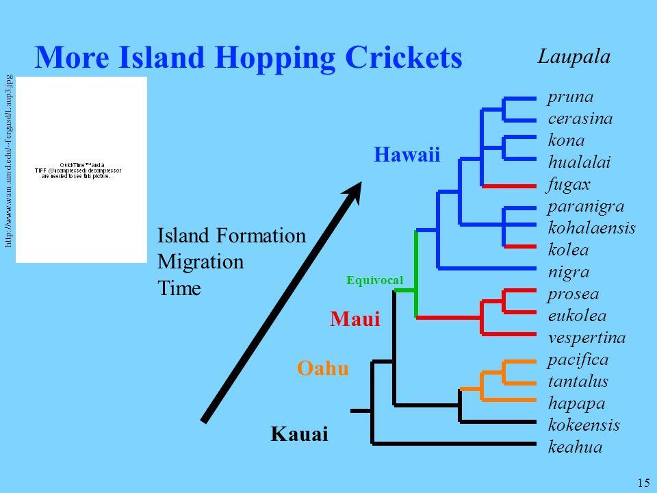 More Island Hopping Crickets