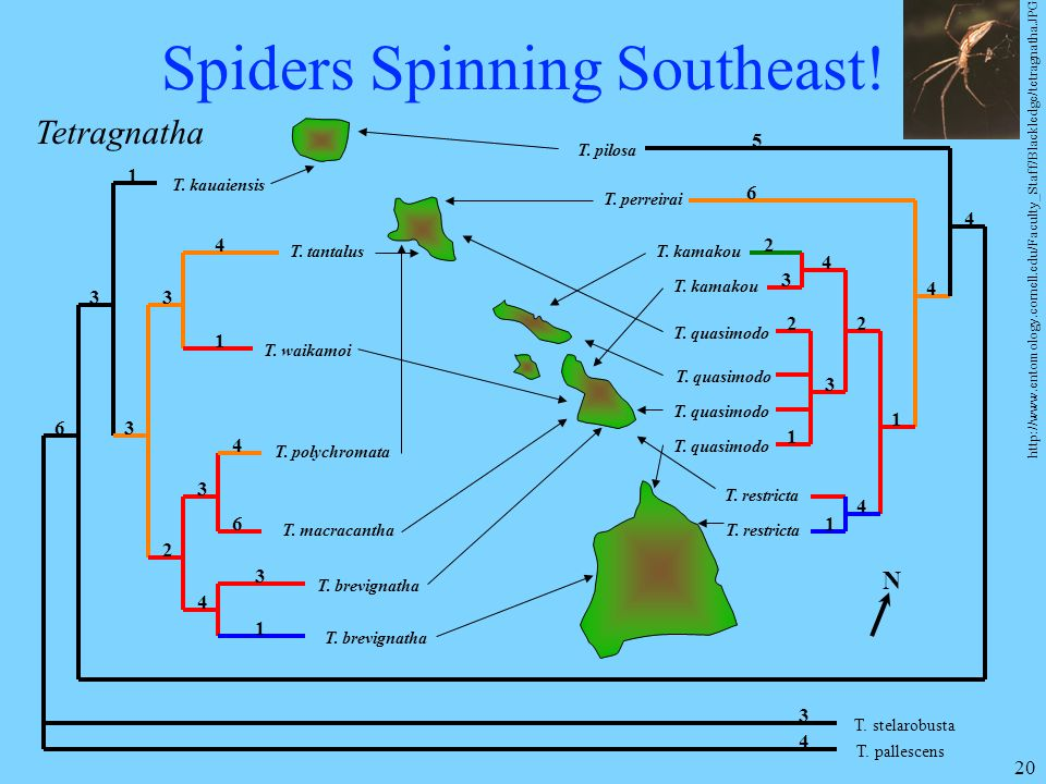 Spiders Spinning Southeast!