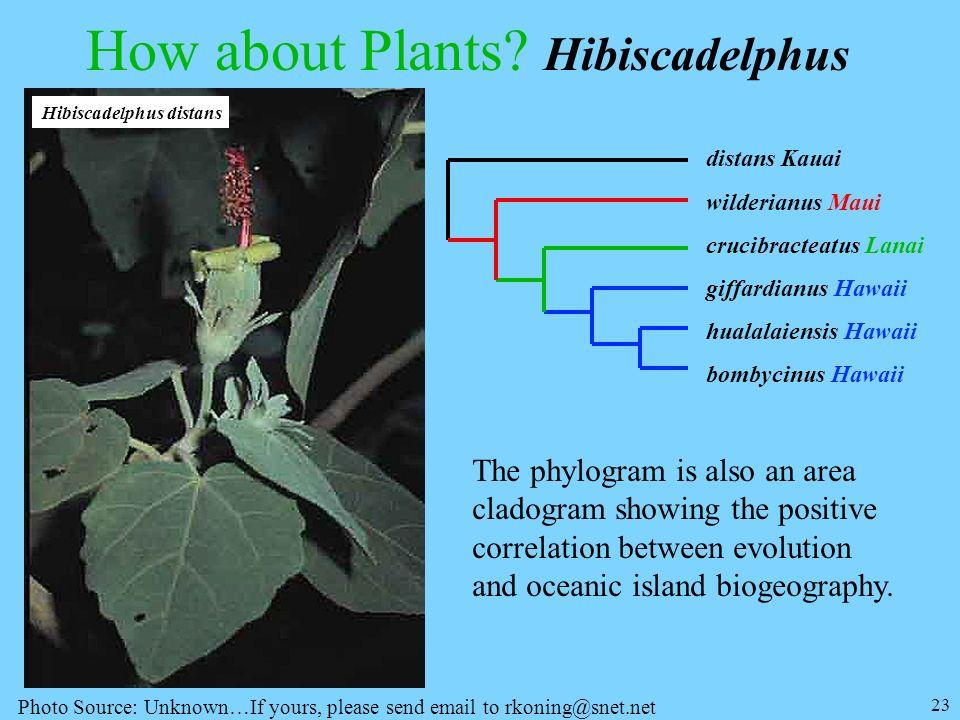 How about Plants Hibiscadelphus