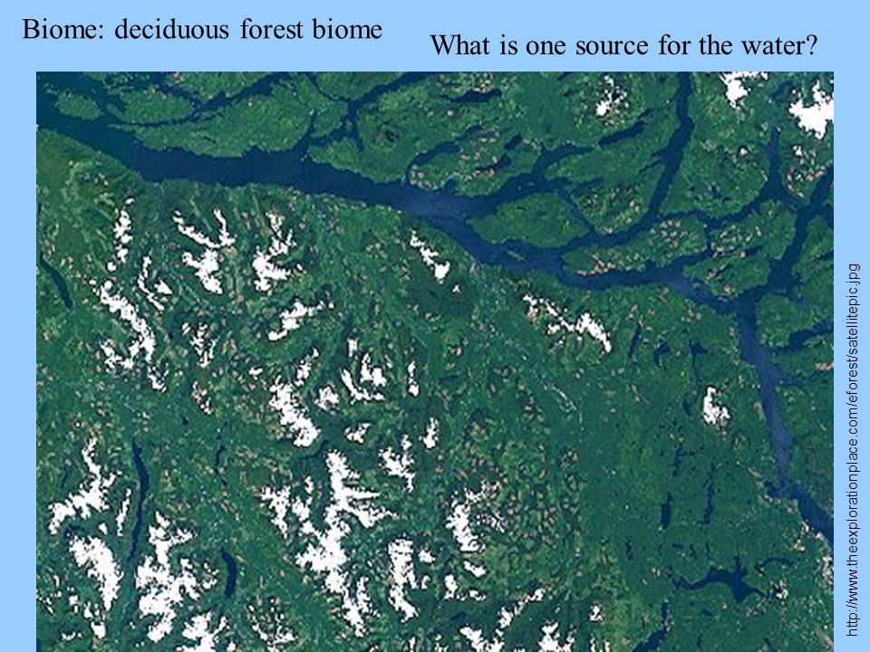 Biome: deciduous forest biome What is one source for the water