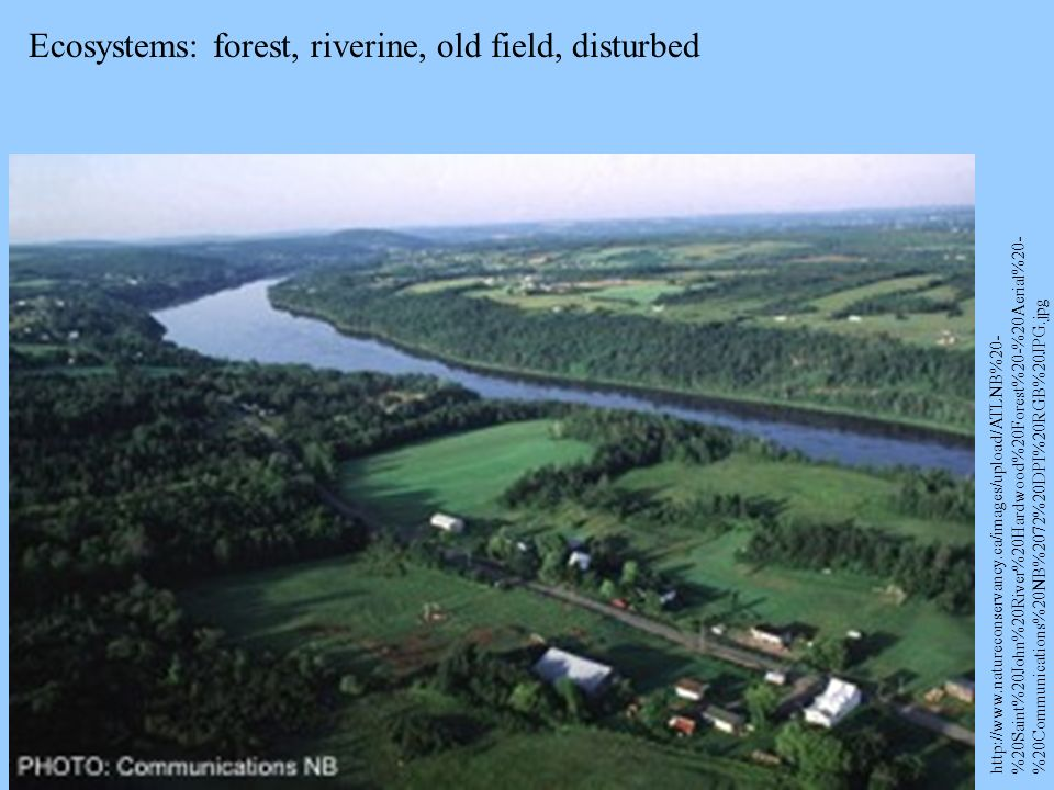 Ecosystems: forest, riverine, old field, disturbed