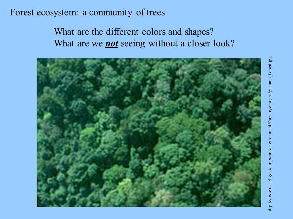 Forest ecosystem: a community of trees