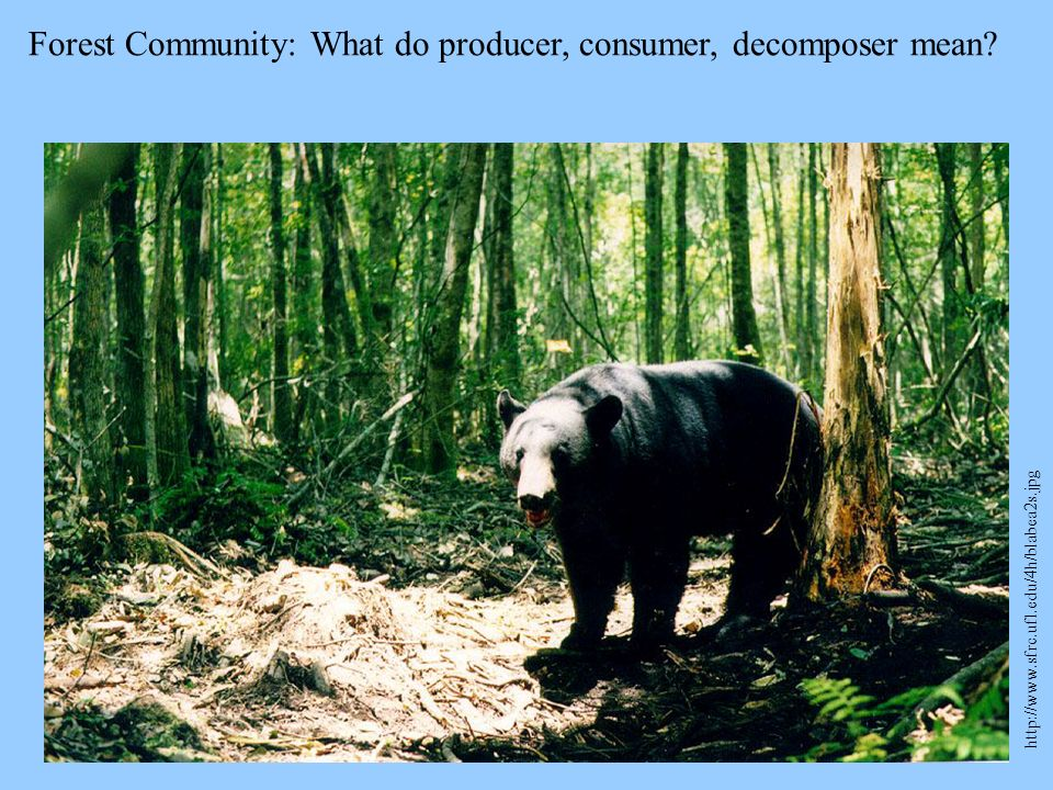 Forest Community: What do producer, consumer, decomposer mean