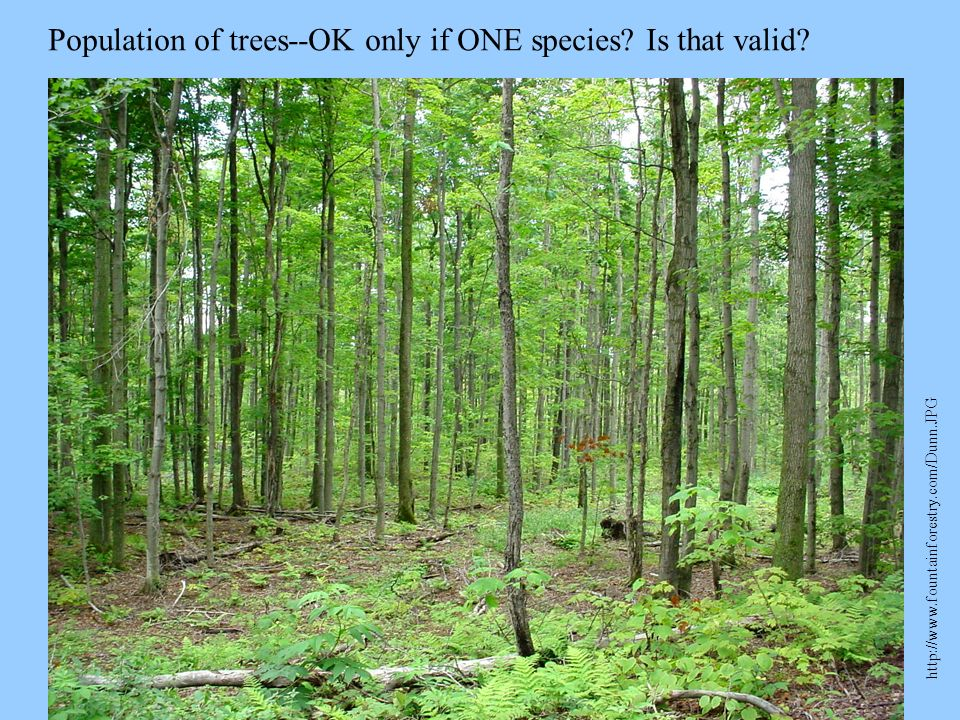 Population of trees--OK only if ONE species Is that valid