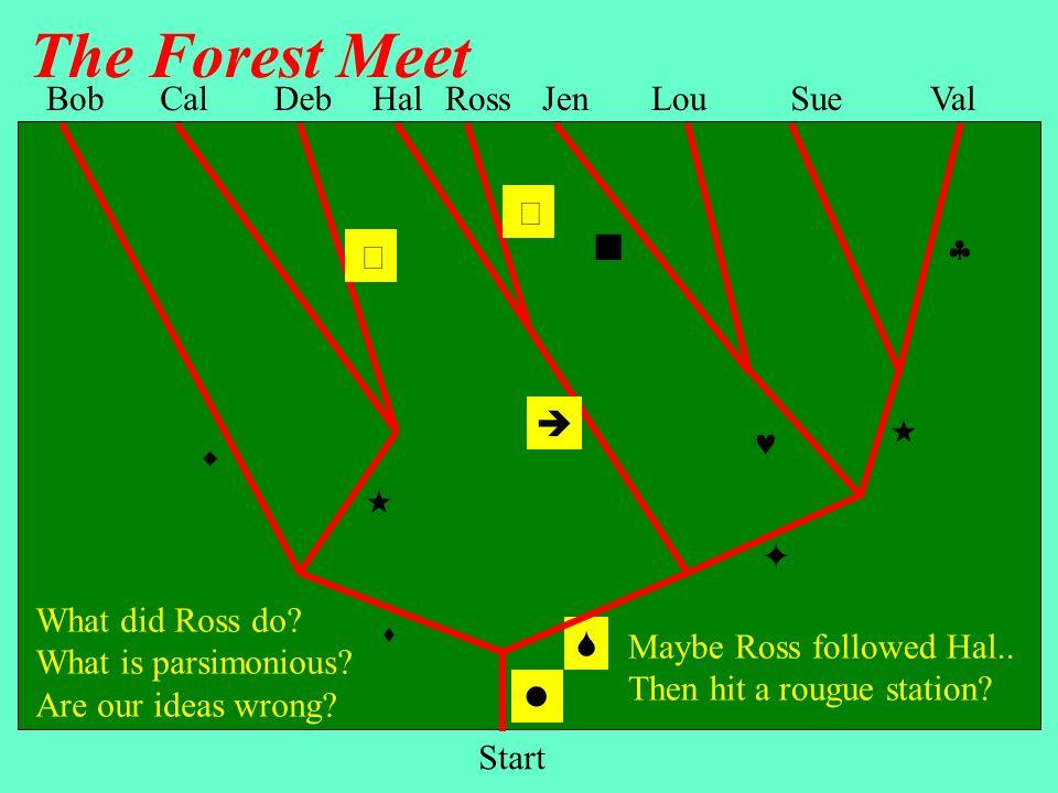 The Forest Meet Bob Cal Deb Hal Ross Jen Lou Sue Val         