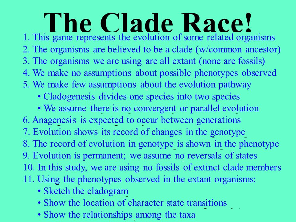 The Clade Race! This game is a cross-country race in a forest