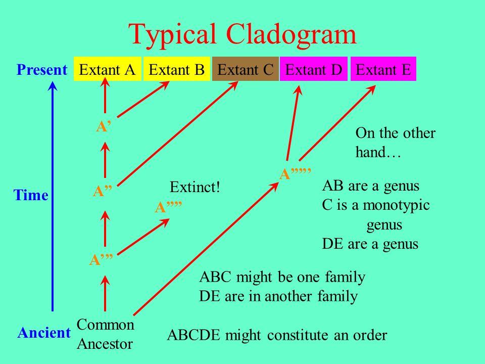 Typical Cladogram Present Extant A Extant B Extant C Extant D Extant E