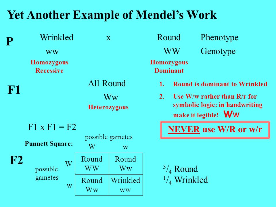 Yet Another Example of Mendel's Work