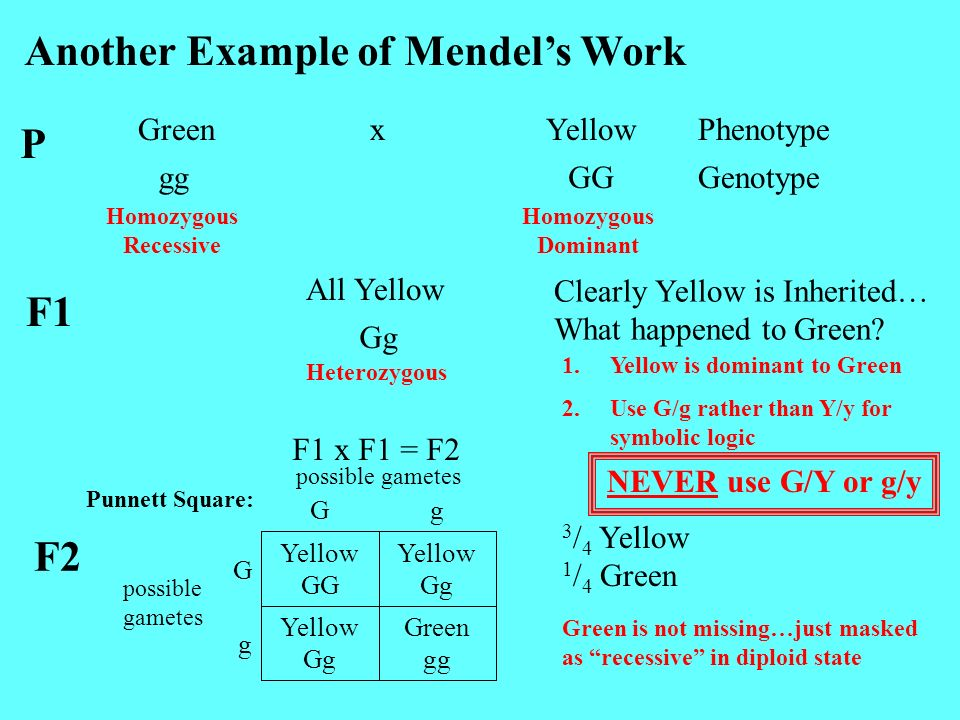 Another Example of Mendel's Work