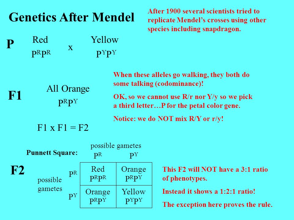 Genetics After Mendel P F1 F2 Red Yellow x PRPR PYPY All Orange PRPY