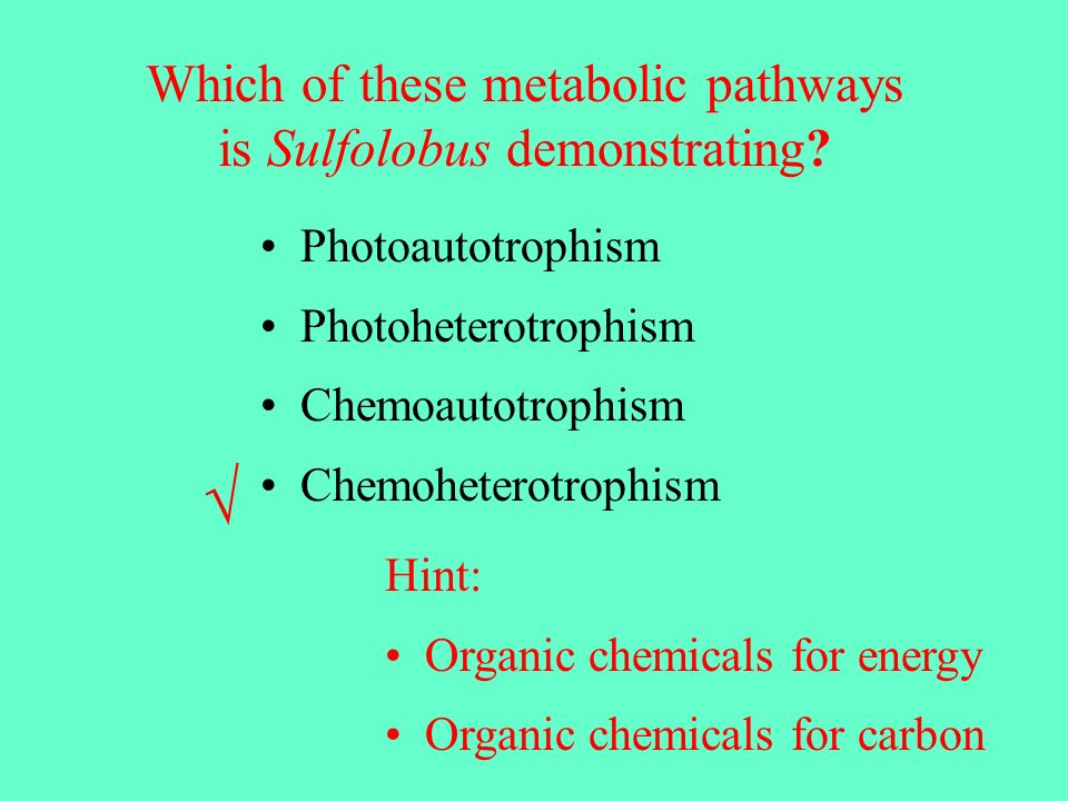 √ Which of these metabolic pathways is Sulfolobus demonstrating