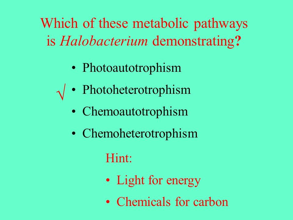 √ Which of these metabolic pathways is Halobacterium demonstrating