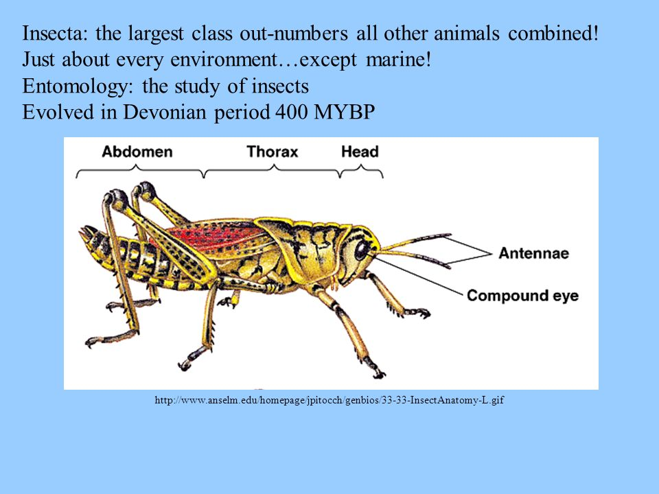 Insecta: the largest class out-numbers all other animals combined!