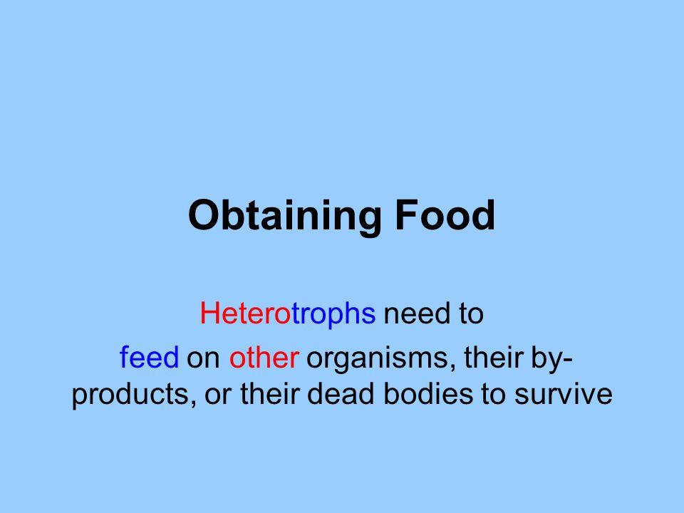 Obtaining Food Heterotrophs need to