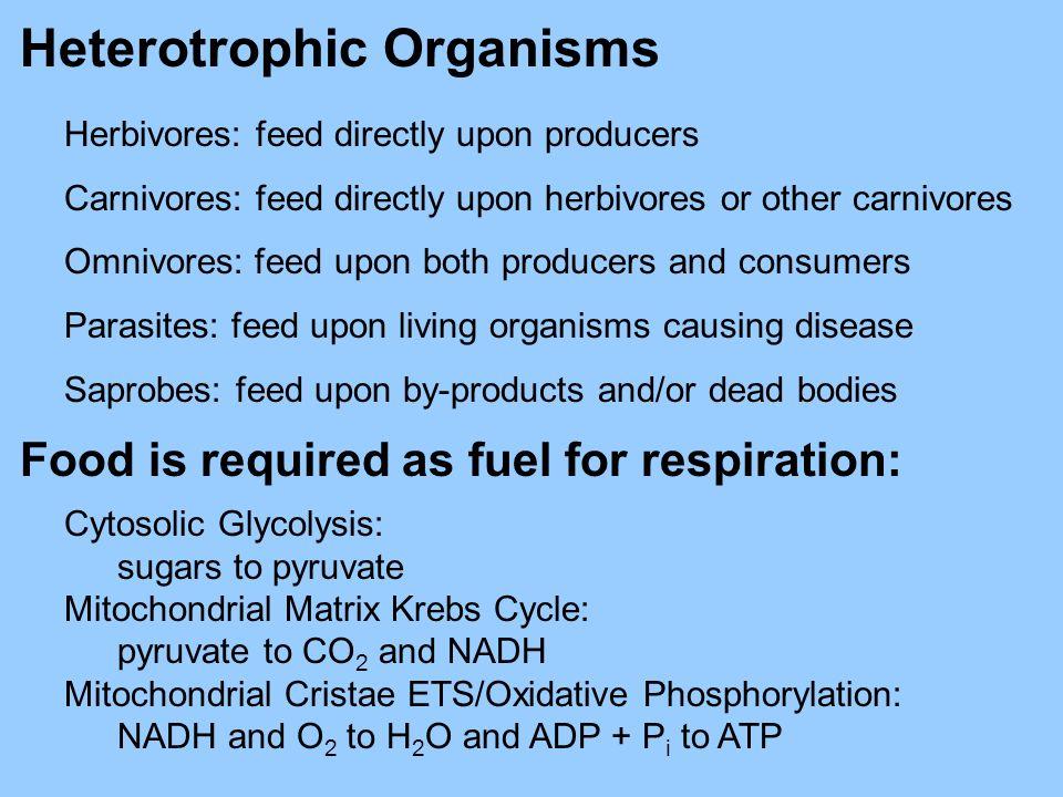 Heterotrophic Organisms