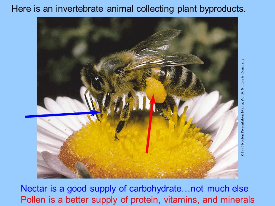 Here is an invertebrate animal collecting plant byproducts.