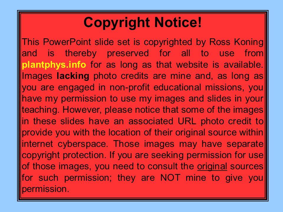Copyright Notice!