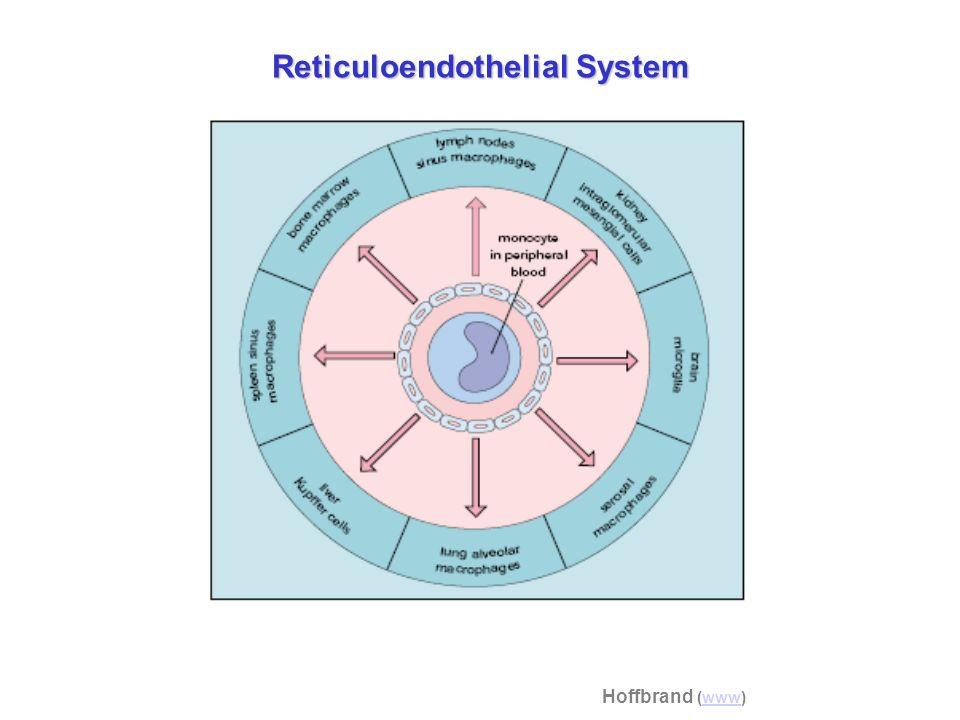 Reticuloendothelial System