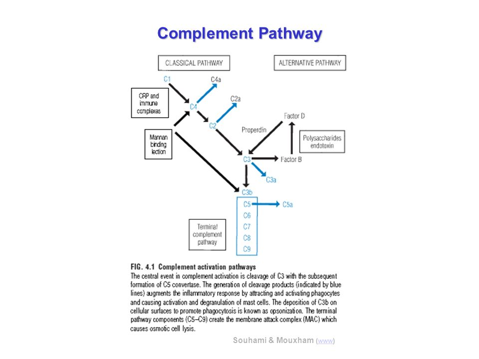Complement Pathway Souhami & Mouxham (www)