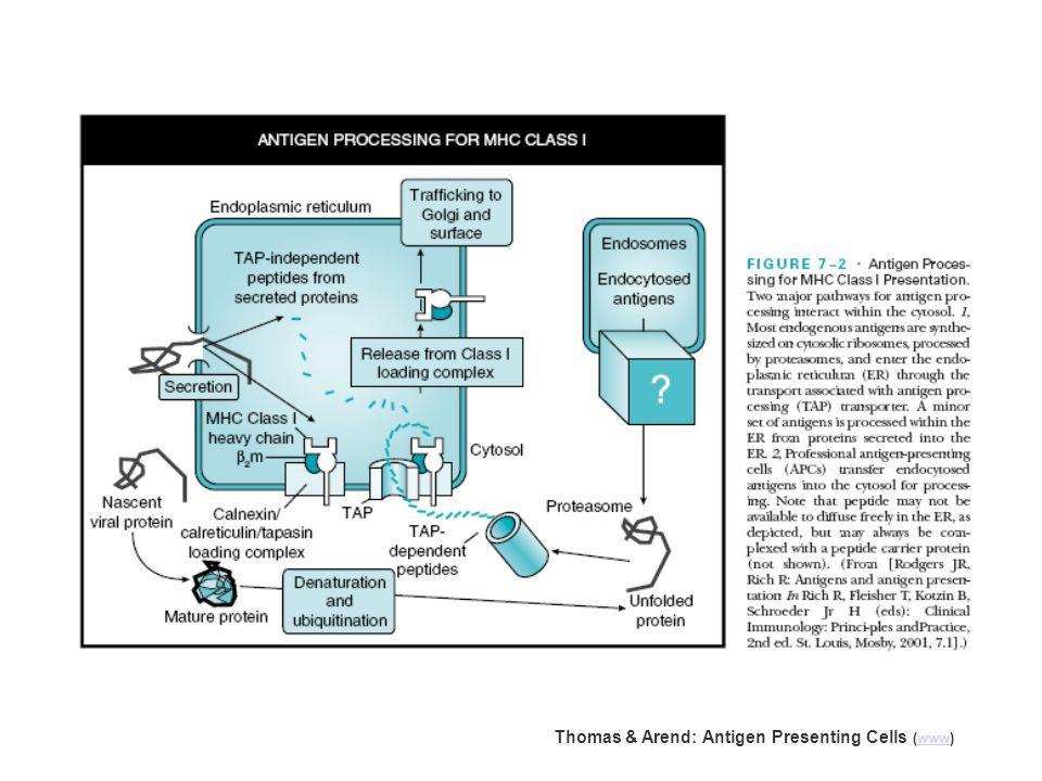 Thomas & Arend: Antigen Presenting Cells (www)