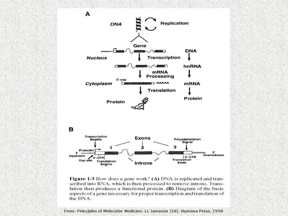 From: Principles of Molecular Medicine. LL Jameson (Ed)