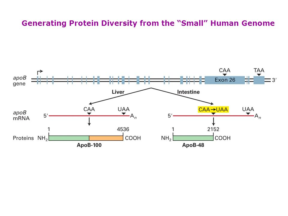 Generating Protein Diversity from the Small Human Genome