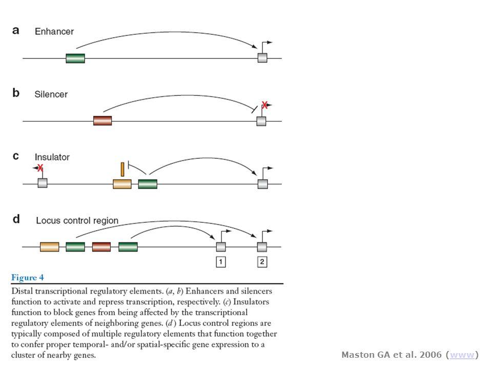 Maston GA et al. 2006 (www)