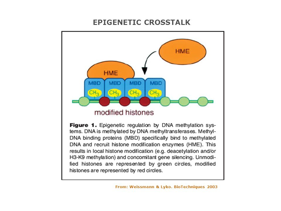 EPIGENETIC CROSSTALK From: Weissmann & Lyko. BioTechniques 2003