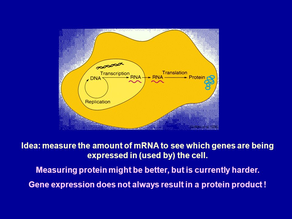 Measuring protein might be better, but is currently harder.