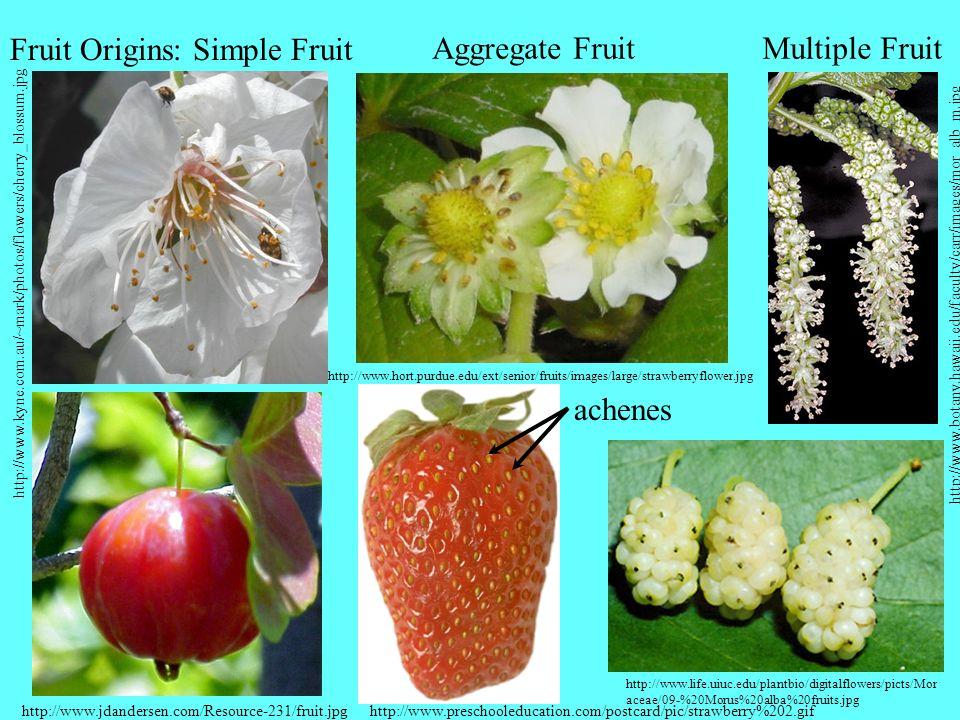 Fruit Origins: Simple Fruit Aggregate Fruit Multiple Fruit