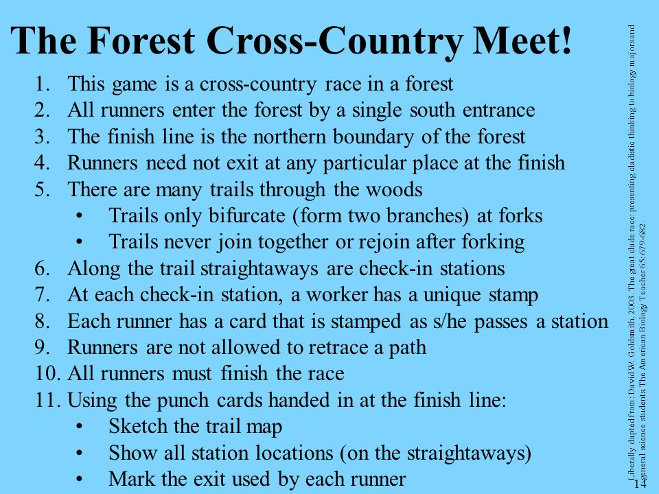 The Forest Cross-Country Meet!