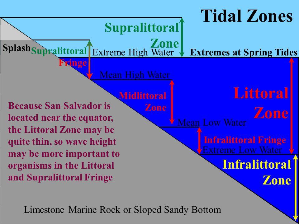 Tidal Zones Littoral Zone Supralittoral Zone Infralittoral Zone Splash