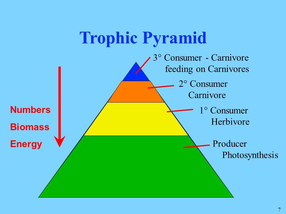 Trophic Pyramid 3° Consumer - Carnivore feeding on Carnivores