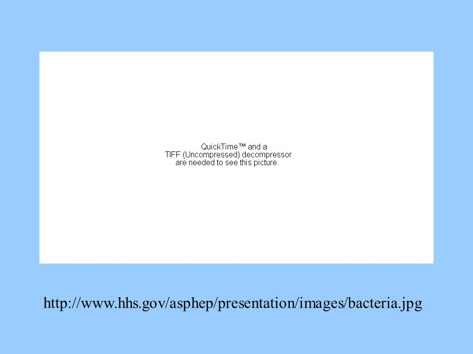 http://www.hhs.gov/asphep/presentation/images/bacteria.jpg