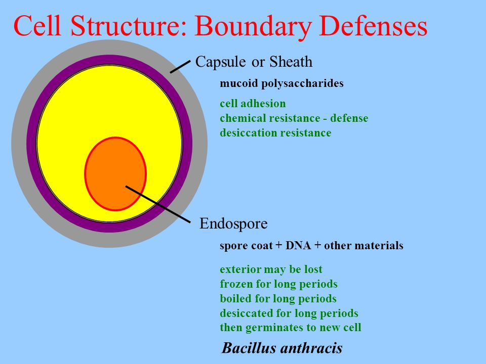 Cell Structure: Boundary Defenses