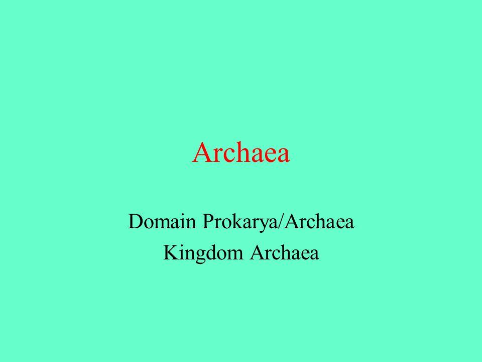 Domain Prokarya/Archaea Kingdom Archaea