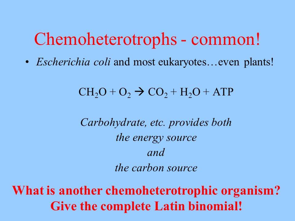 Chemoheterotrophs - common!