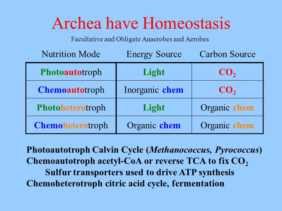 Archea have Homeostasis