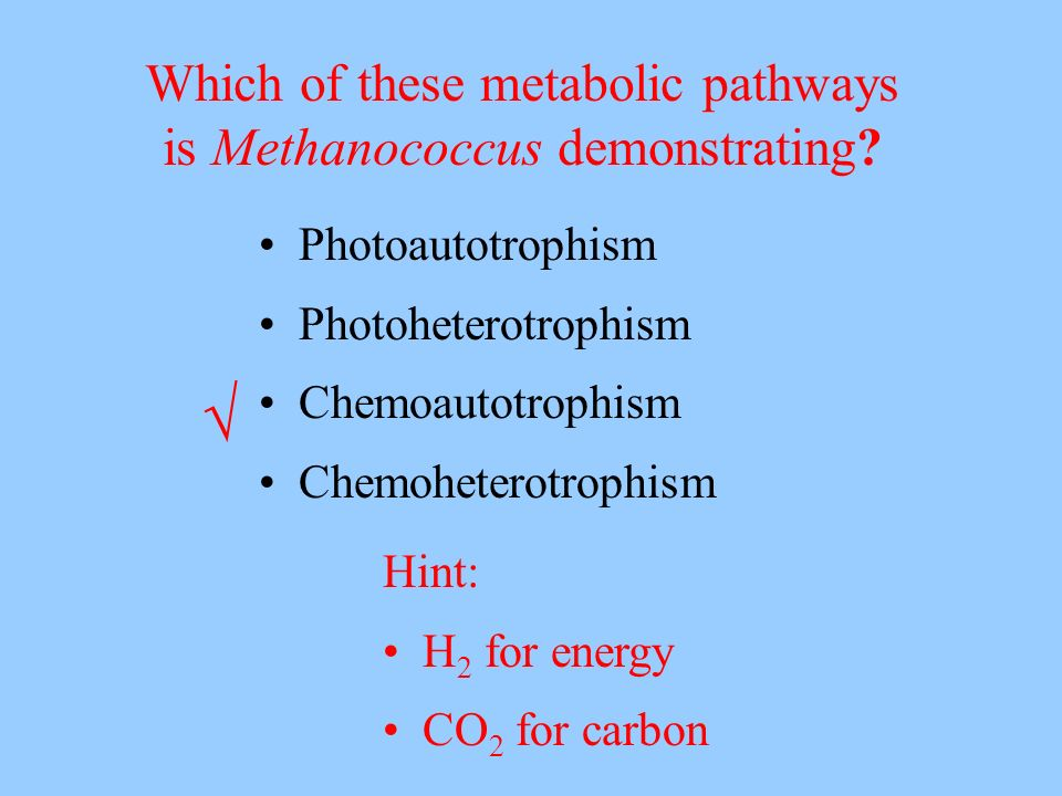 √ Which of these metabolic pathways is Methanococcus demonstrating