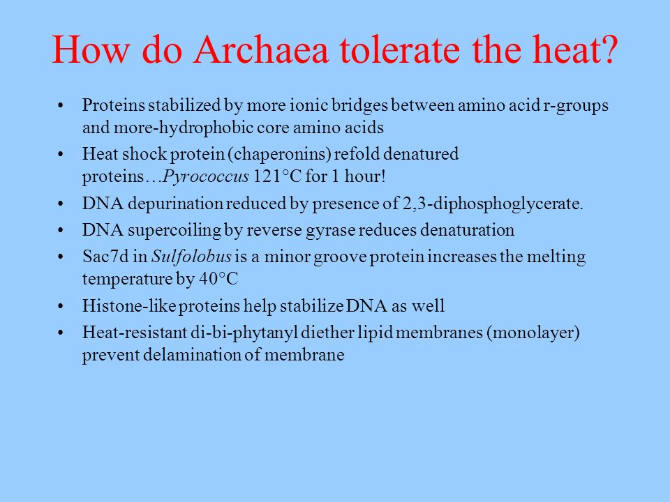 How do Archaea tolerate the heat