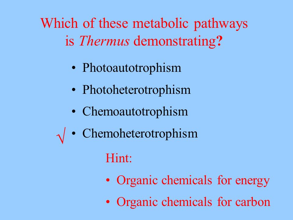 √ Which of these metabolic pathways is Thermus demonstrating