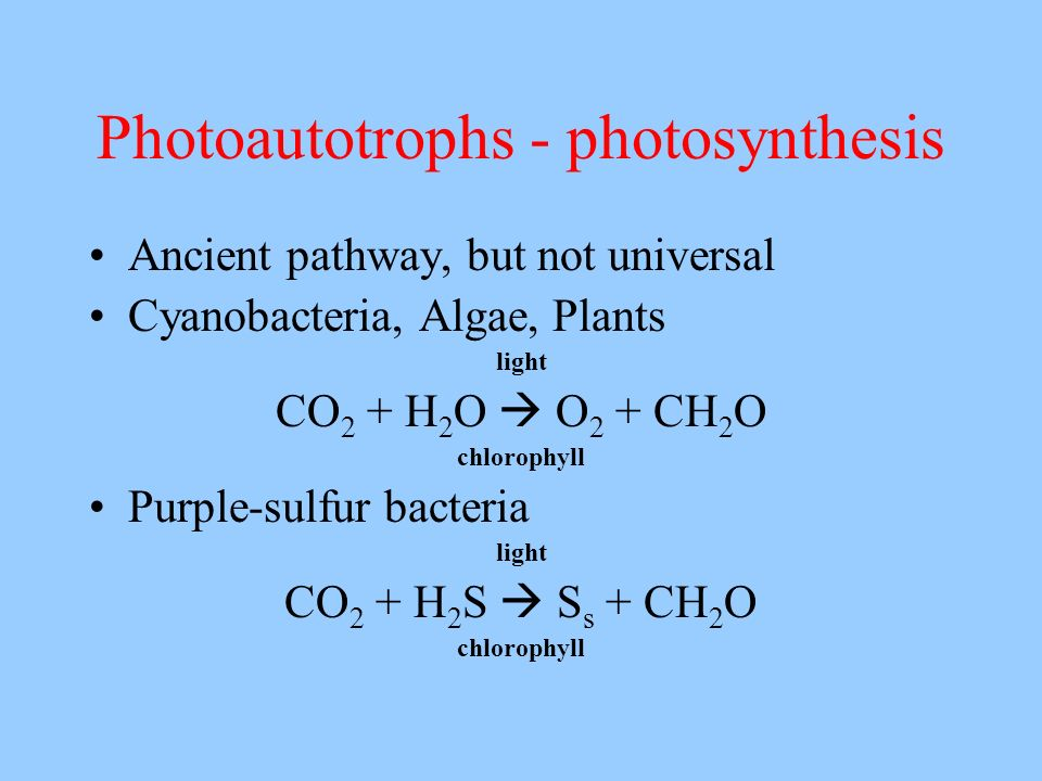 Photoautotrophs - photosynthesis