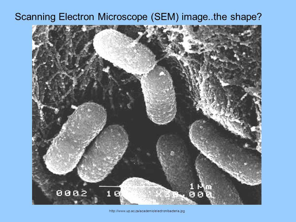 Scanning Electron Microscope (SEM) image..the shape