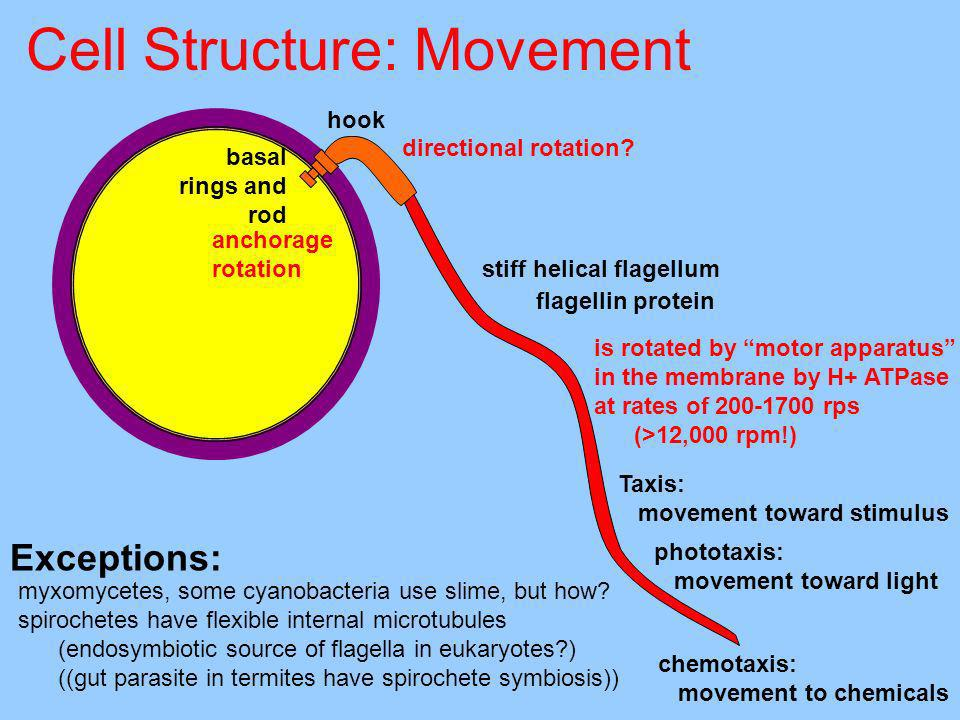 Cell Structure: Movement