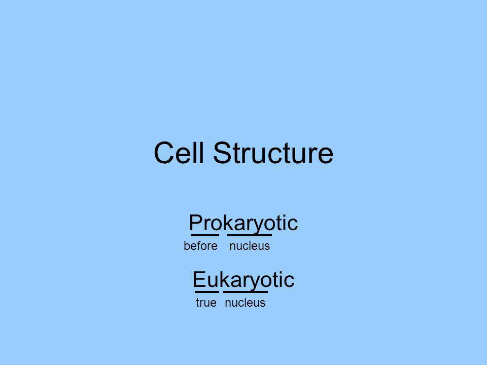 Cell Structure Prokaryotic before nucleus Eukaryotic true nucleus