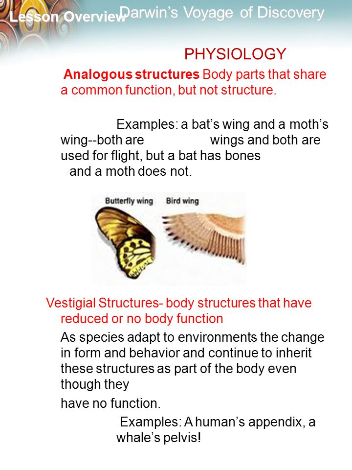 PHYSIOLOGY Analogous structures Body parts that share a common function, but not structure.