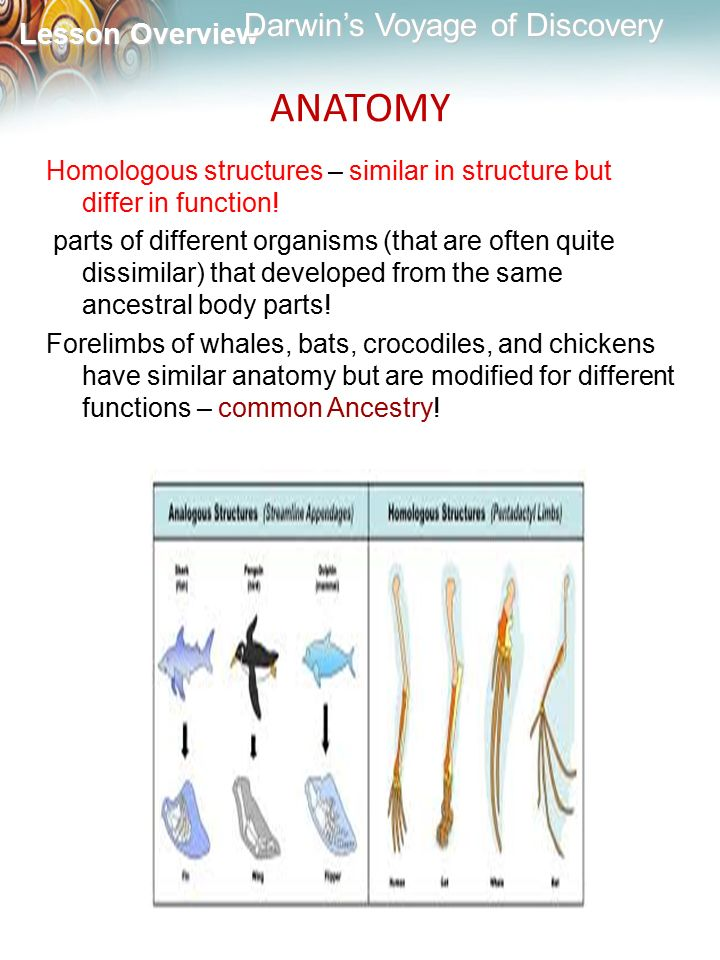 ANATOMY Homologous structures – similar in structure but differ in function!